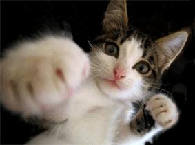 catboxing