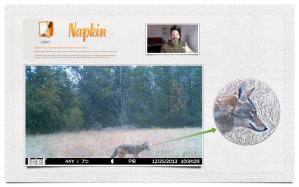 Napkin makes image annotation easy